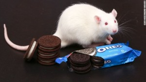 131016100556-lab-rats-oreo-cookies-story-top